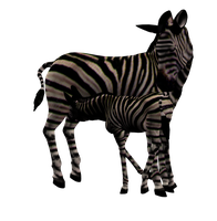 Zebra Mare and Foal Png Stock by Direwrath