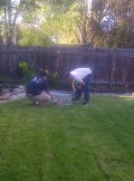 Just some guys playn with my guinea pigs by KMKramer44
