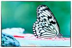 Butterfly by JubayerMahbub