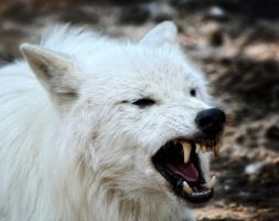 White Wolf Warrior by Manu34