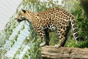 view to jaguar above 2 by ingeline-art