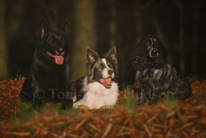 Kye, Taz and Pepper commissioned portrait by Canis-Lupess