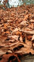 Fallen Leaves by Living-Riot