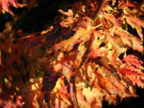 Autumn Leaves by krissiev
