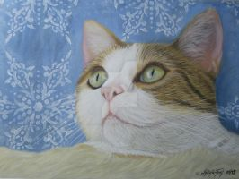 Winter cat - Pastel Painting by theArtofsilviafrei