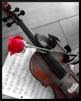 A rose for the violinist by niksi13