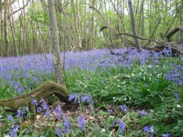 Bluebells For Canan by Aseamlessbonds