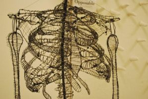 Wire Skeleton - Ribcage by Squeep
