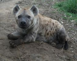 Cute Hyena by TheoGoth