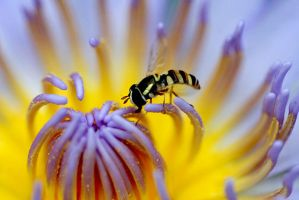 Colourful Flower and Hoverfly by vids