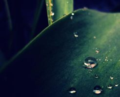 Raindrops by sisselPhotography