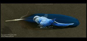 Spix's Macaw Feather by Nambroth
