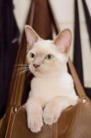 Cat in a bag by rouellephotographie