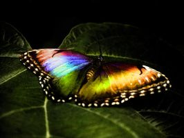 Rainbow Butterfly by BiHclub