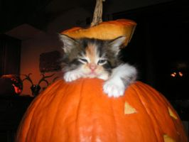 Kitty Fell in the Pumpkin by Psychsister1982