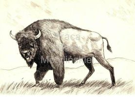 Bison by jolabrodnica