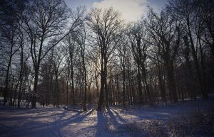 Winter panorama 6 by Dullface
