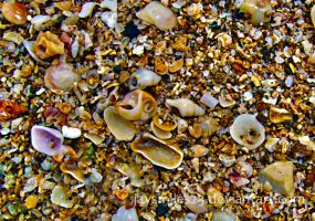 ....:::Sea Shells:::.... by JAYSMILES23