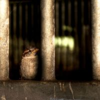 bird in prison by marikaz