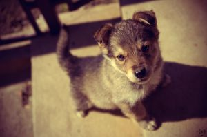 Seriously Puppy by Exillon