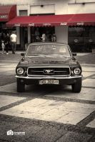 The Stang by GregKmk
