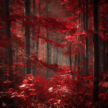 Fire without flame by ildiko-neer