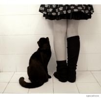 Kitty under skirt by specu-loos