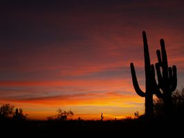 A coulpe of saguaro enjoying the sunset by moonknight420