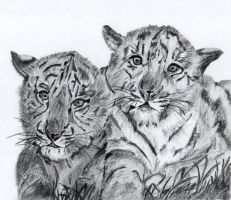 tiger cubs by dielectric-m