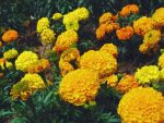 Orange And Yellow by bphotographyx