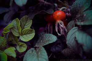 reds by gremo-photography