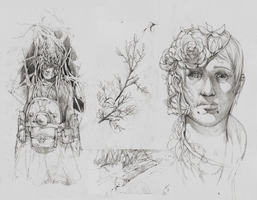 pencil sketches by TimLiljefors