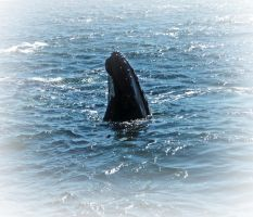 Whale by tracykenefick