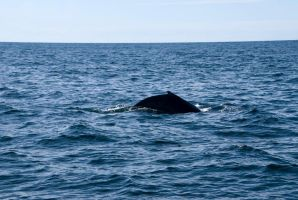 Whale back, Up Close 3 by Miss-Tbones