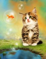 Fish Bubble and Cat by ktryon