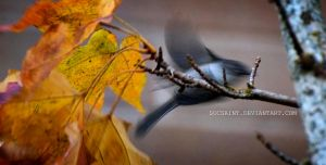 Fly Away by MaryAnnBubna