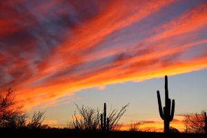 Saguaro Sunset 1636 by mammothhunter