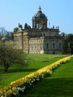 Daffodil slope at Castle Howard by Queenselphie