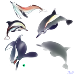 Concept Dolphins by AuldBlue
