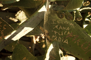 Message on the cactus by Eris-e