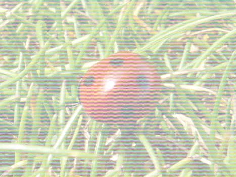 Ladybug by Ian-Parberry