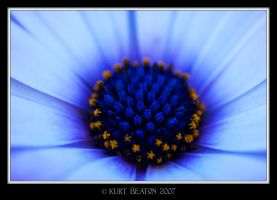 Blue Flower by F2Black
