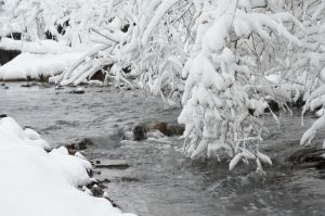 Winter River by ajlordi