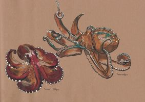 Traditional sketching 4 - Cephalopods by IgnazioDelMar