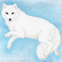 Arctic fox by CunningFox