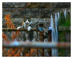 Urban Cats - Fence 3 by CubeMonster