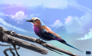 Video - Roller-lilac-breasted by danielbogni