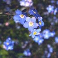Forget me this time by temporariness