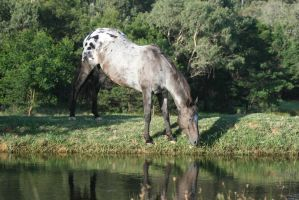 Appaloosa Hill by YumpyStock