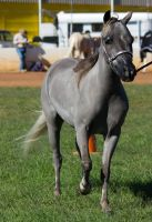 STOCK - 2014 Youngstock-115 by fillyrox